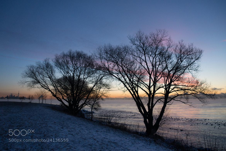 Photograph Cold by Georgia Mizuleva on 500px