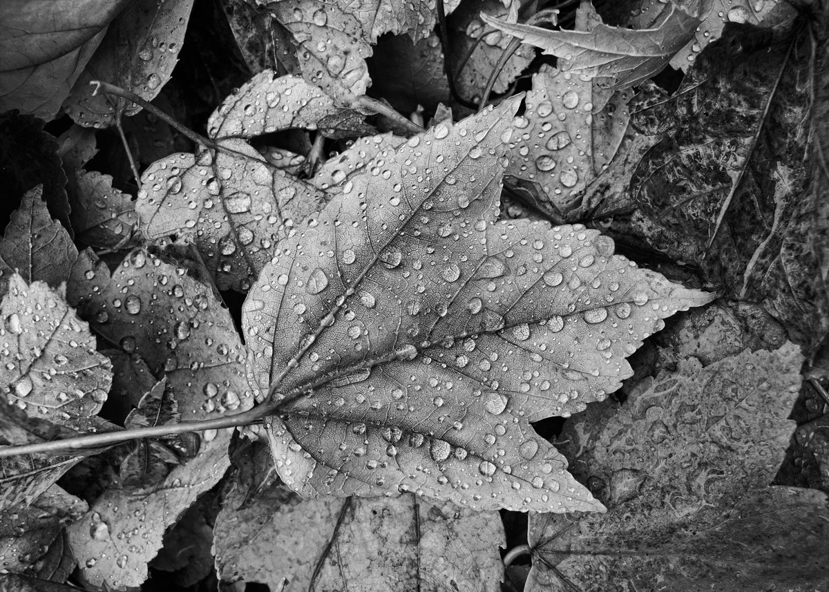 Photograph Leaves by Aaron English on 500px