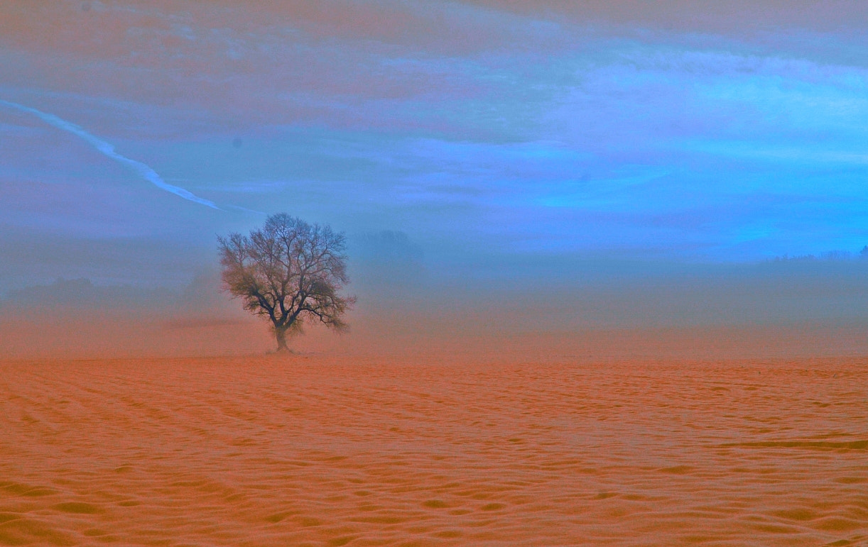Photograph foggy tree by Sir Trauti on 500px