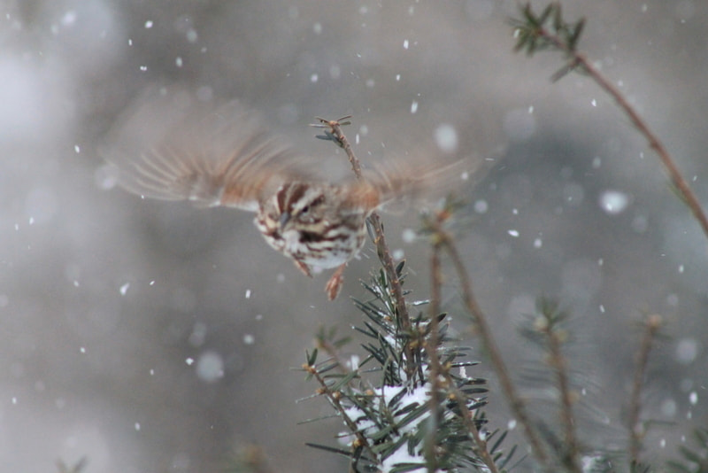 Photograph Snow flight by Wendy Dickey on 500px