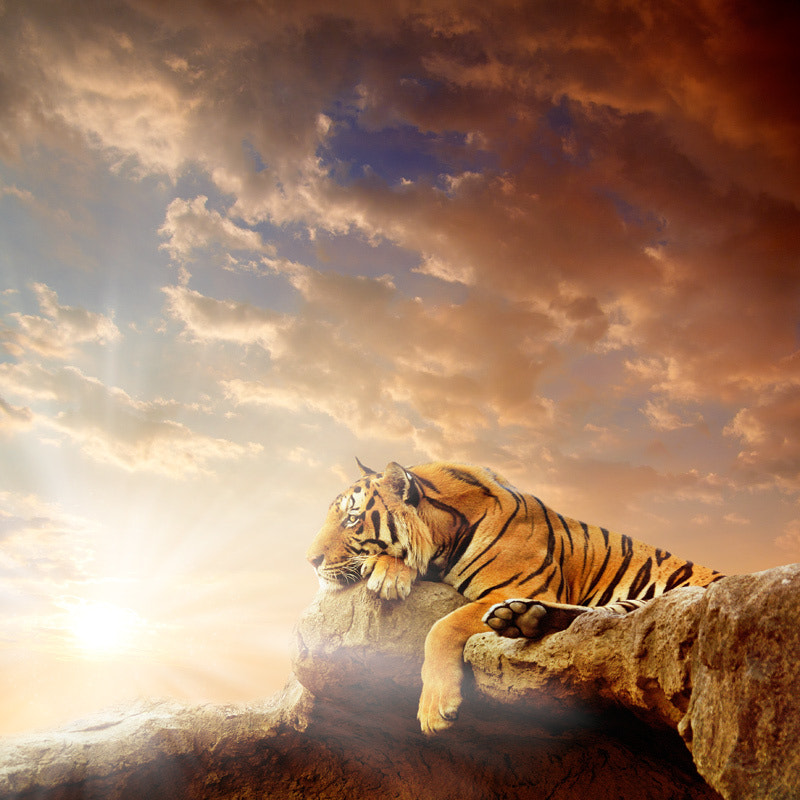 Photograph Eye of the Tiger by Manuel Lao on 500px