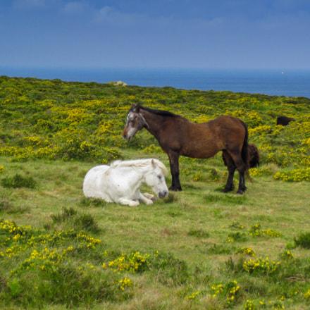 Francia cavalli al pascolo, Canon POWERSHOT D10