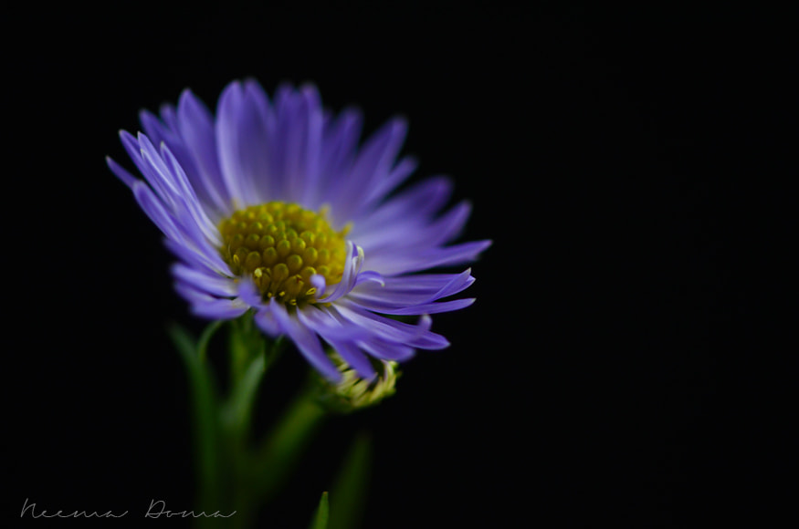 Photograph sweet little flower  by Neema Doma on 500px
