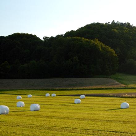 field still life, Nikon D3100, Tamron SP 35mm f/1.8 VC