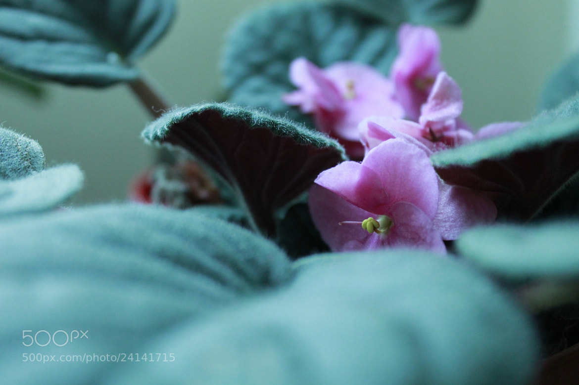 Photograph Untitled by blc53 on 500px