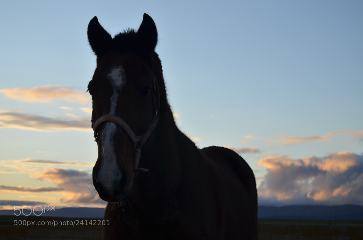 Photograph Horse, sunset and landscape. by Sergio Nuñez on 500px