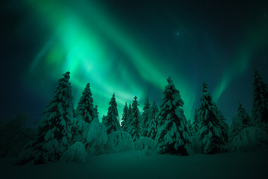 Aurora Forest by Arild Heitmann on 500px.com