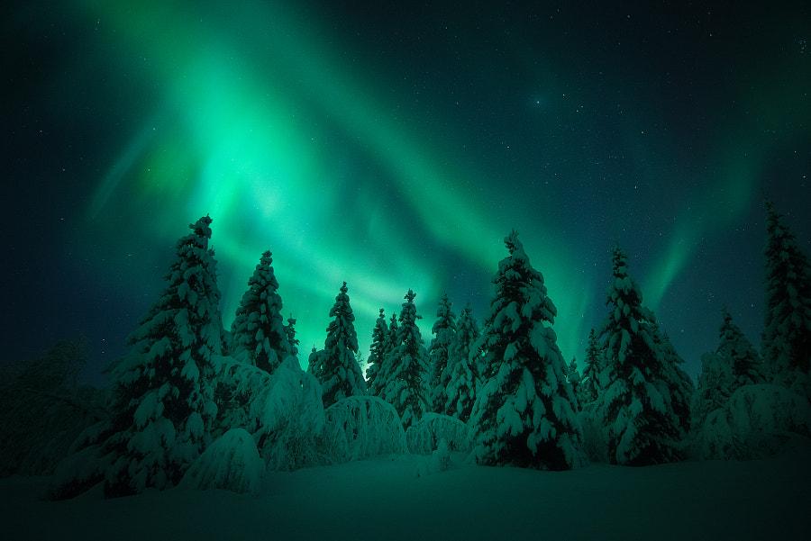 Aurora Forest by Arild Heitmann on 500px.com