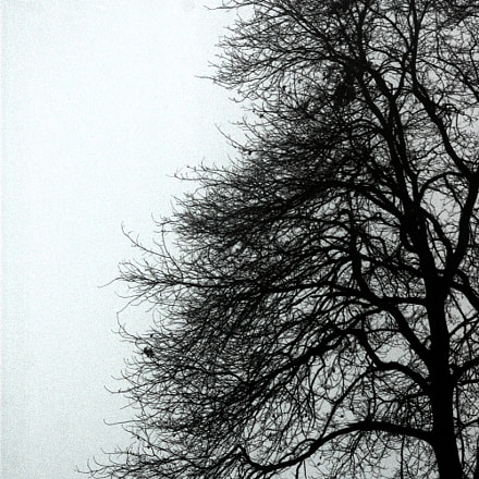 albero, Nikon D70, Sigma Macro 105mm F2.8 EX DG