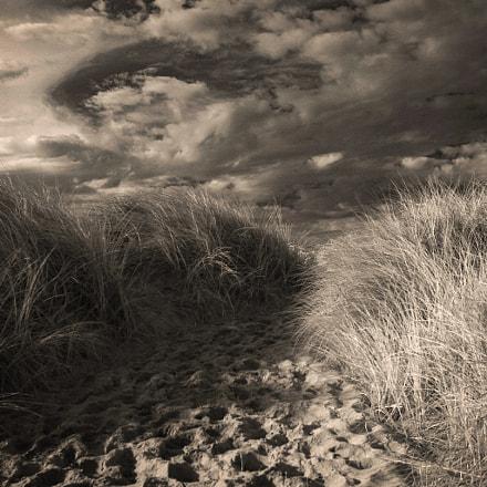 path through the reeds, Canon EOS D60