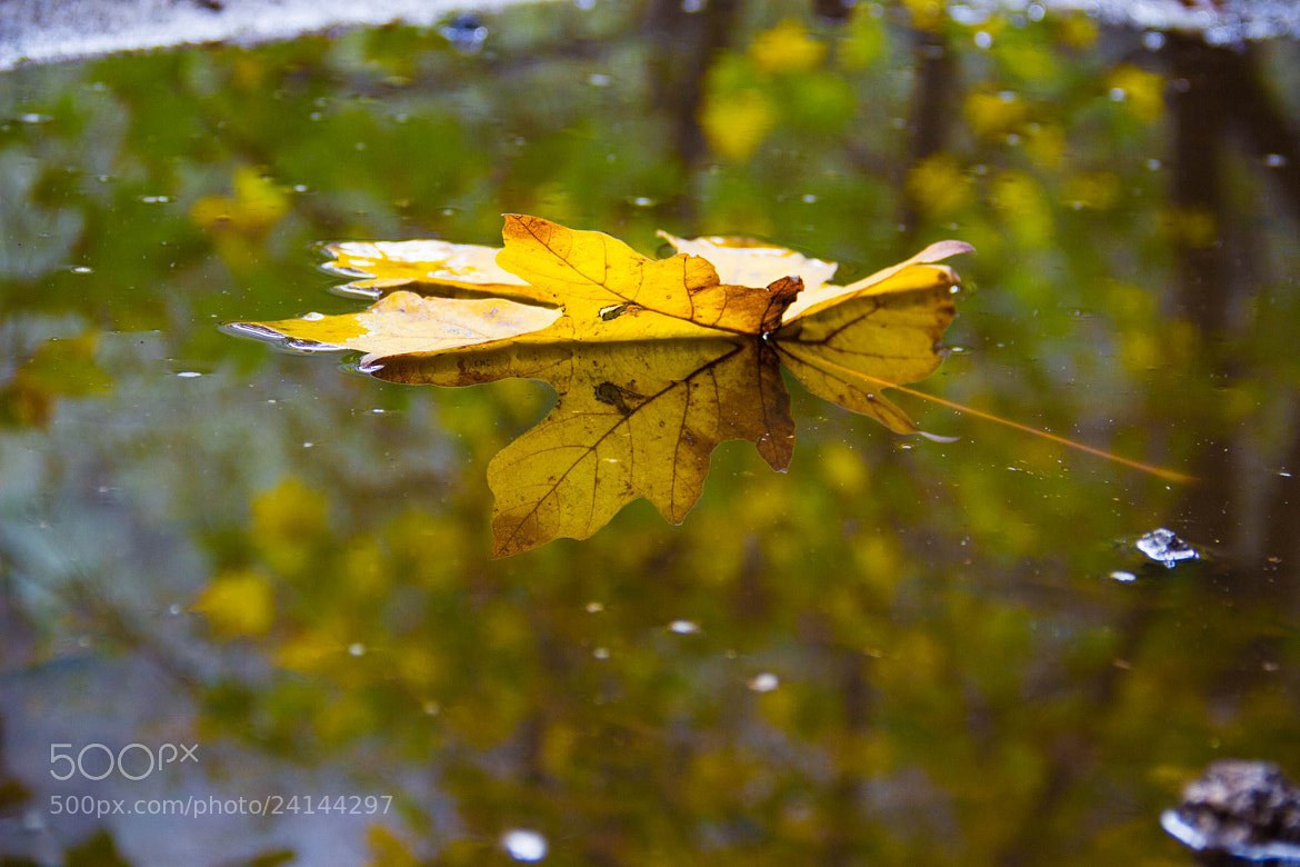Photograph Fall Leaf by Zayda Salazar on 500px
