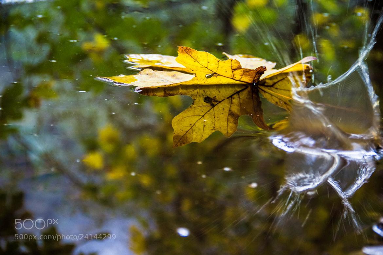Photograph Fall leaf 2 by Zayda Salazar on 500px