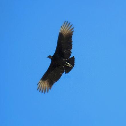 Biiiiiig bird, Canon DIGITAL IXUS 95 IS