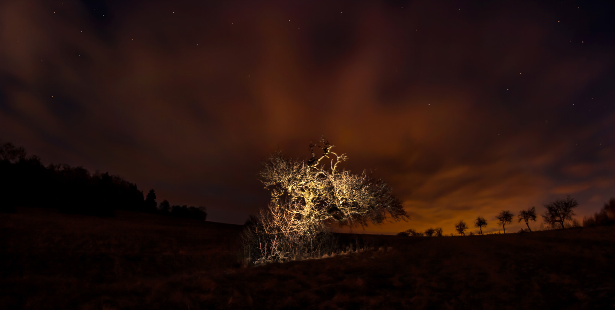 Photograph Mystery Tree by NICOLAI BÖNIG on 500px