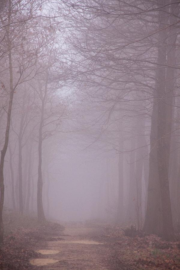 Brouillard (Fog) de Christine Druesne sur 500px.com