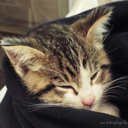 A Kitten Named Bagel., Fujifilm FinePix S8200