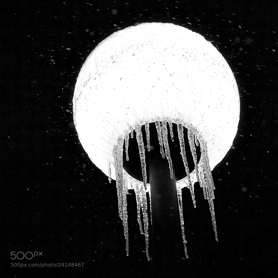 "Photograph ""jellyfish"" by Sebastian Kwiatek on 500px"