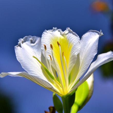 Flor blanca, Nikon D5300, Sigma 18-125mm F3.8-5.6 DC OS HSM