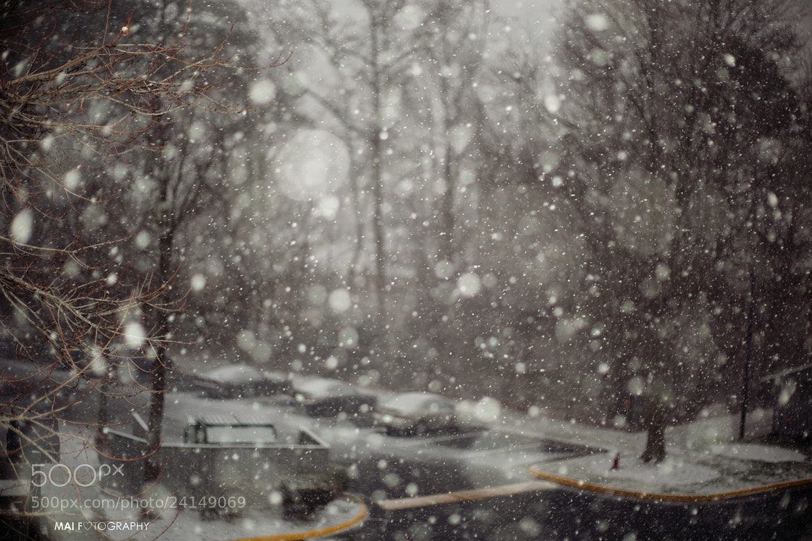 Photograph Snow in VB by Mai Fotography on 500px
