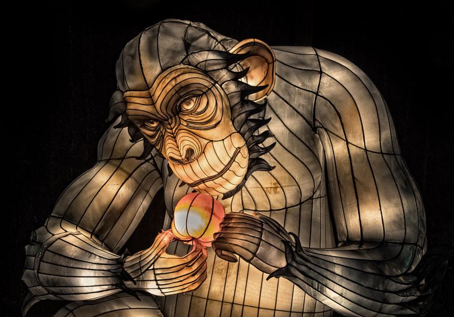 Chimpanzee lantern