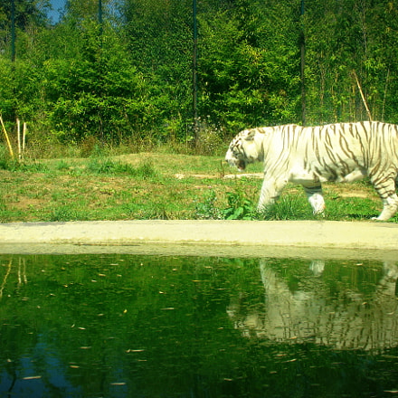 The White Tiger ?, Sony DSC-W55