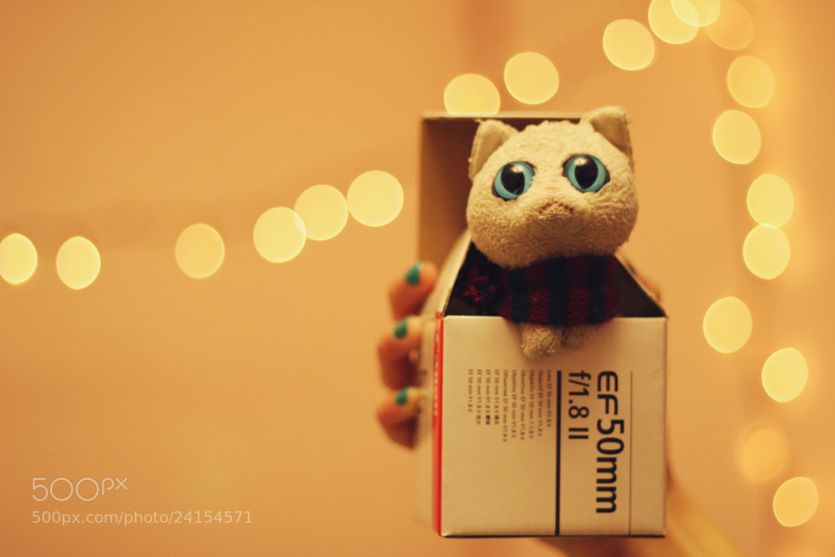 Photograph Cat in a Box by Tammy Duong on 500px