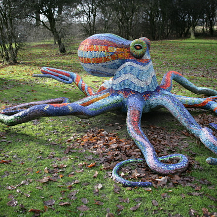 Octopus in the park, Canon EOS-1DS MARK II, 28.0 - 135.0 mm