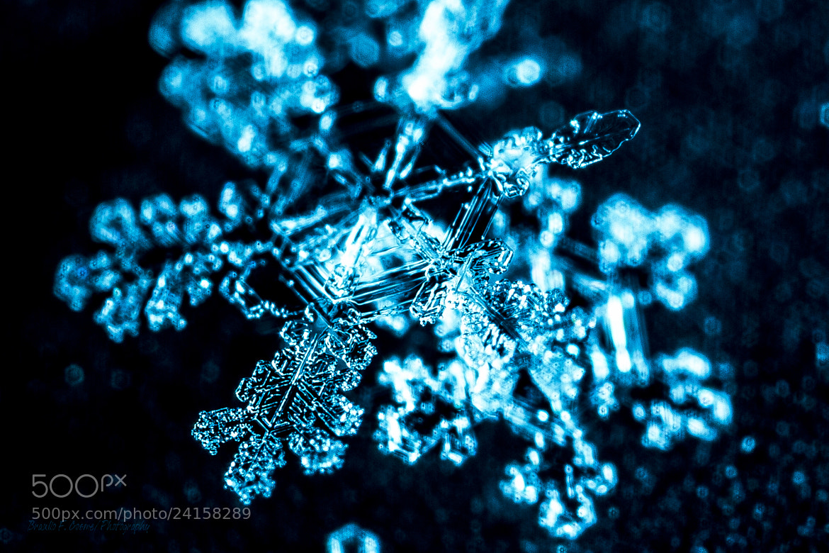 Photograph The snow is fallin' by Braulio Cosme on 500px