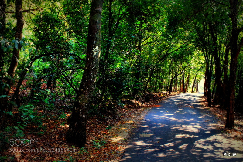 Photograph sheltered path by piCniK  on 500px