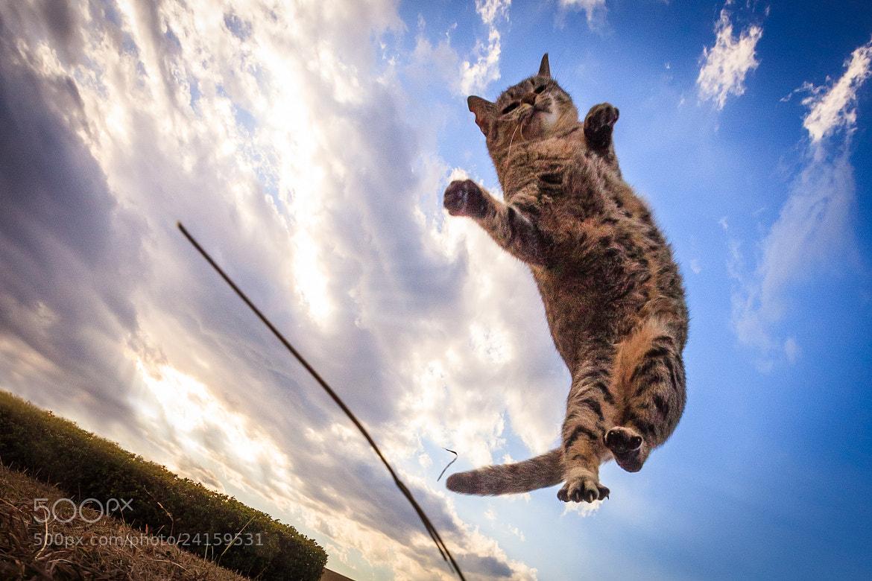 Photograph Cat Jump! by Seiji Mamiya on 500px