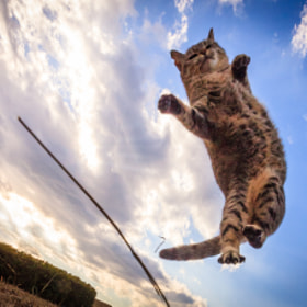 Cat Jump! by Seiji Mamiya (natusame_eos)) on 500px.com