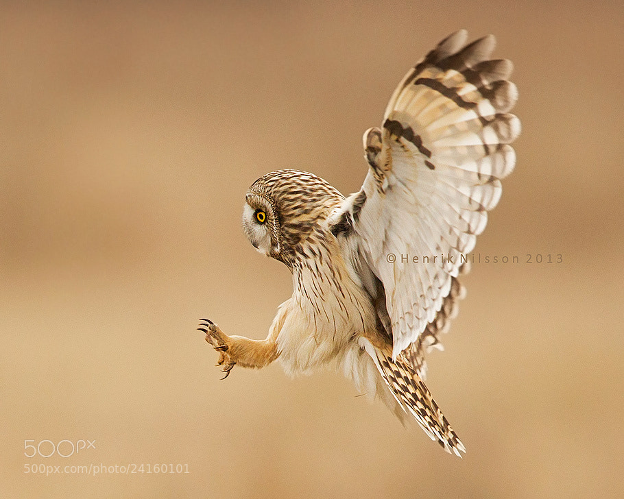 Photograph Landing by Henrik Nilsson on 500px
