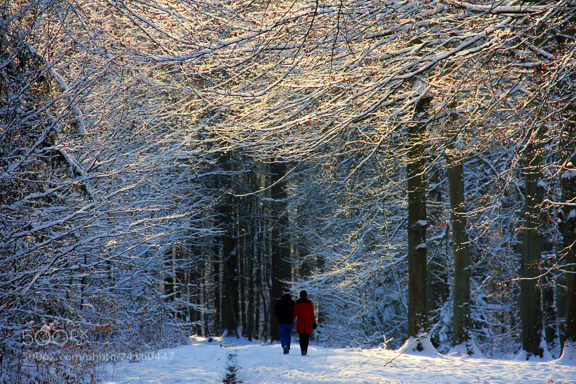 Photograph Winter stroll by Grit Ende on 500px