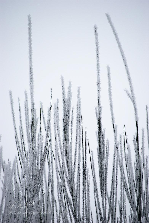 Photograph Winter Pattern by Yann VDM on 500px