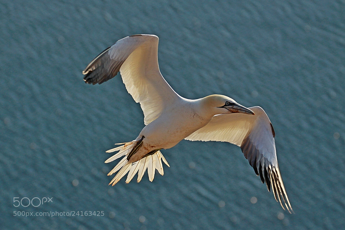 Photograph I' m flying by Blaz Crepinsek on 500px