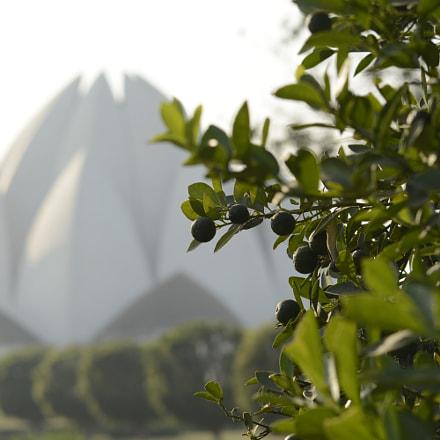 Untitled, Nikon D5200, AF Zoom-Nikkor 70-300mm f/4-5.6D ED