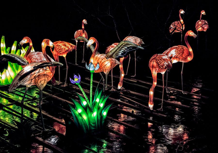 Flamingoes in the rain