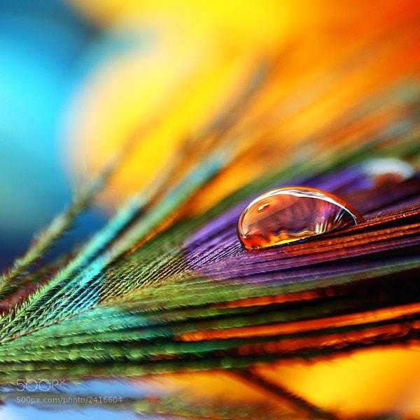 Photograph Color show by Joakim Kræmer on 500px