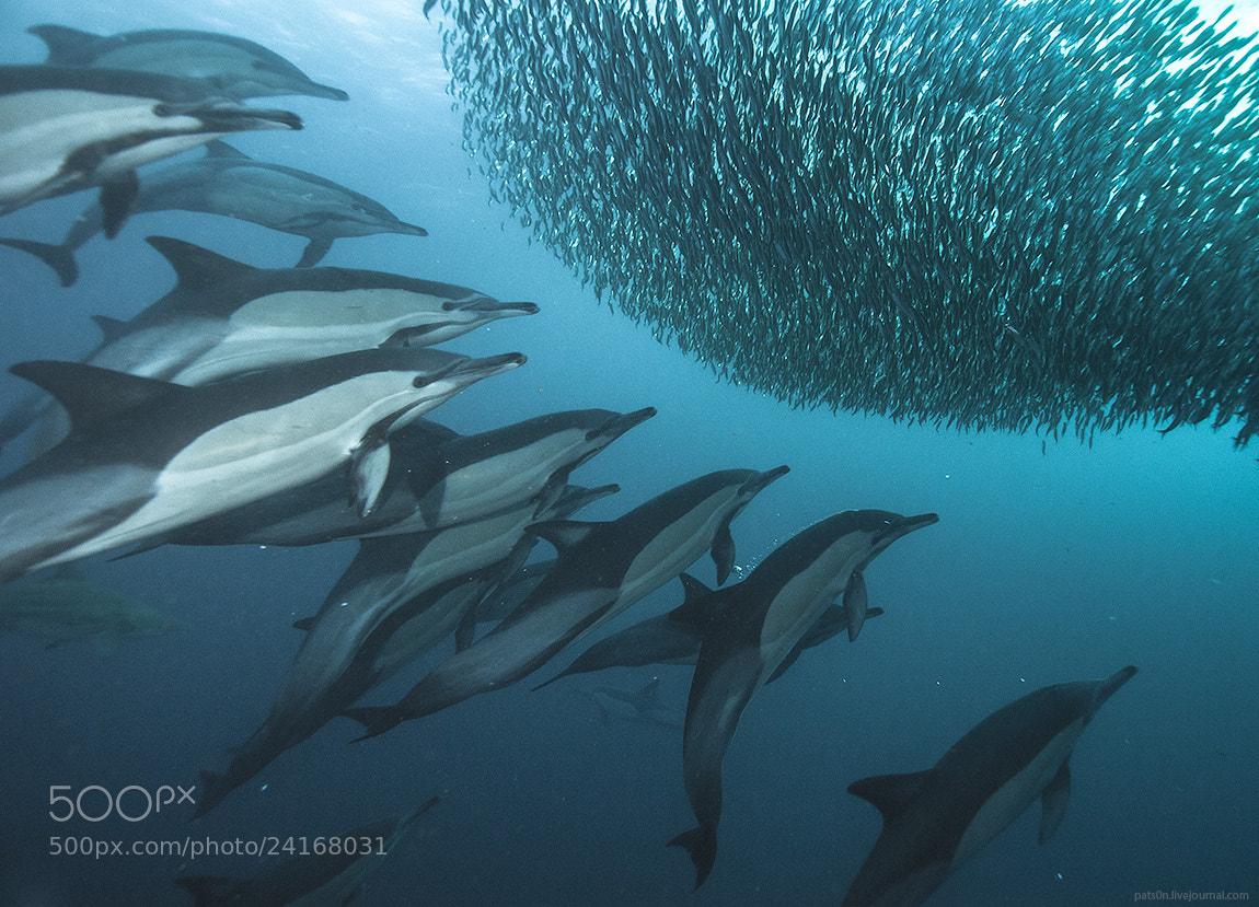 Photograph sardine wars ep. V by Alexander Safonov on 500px