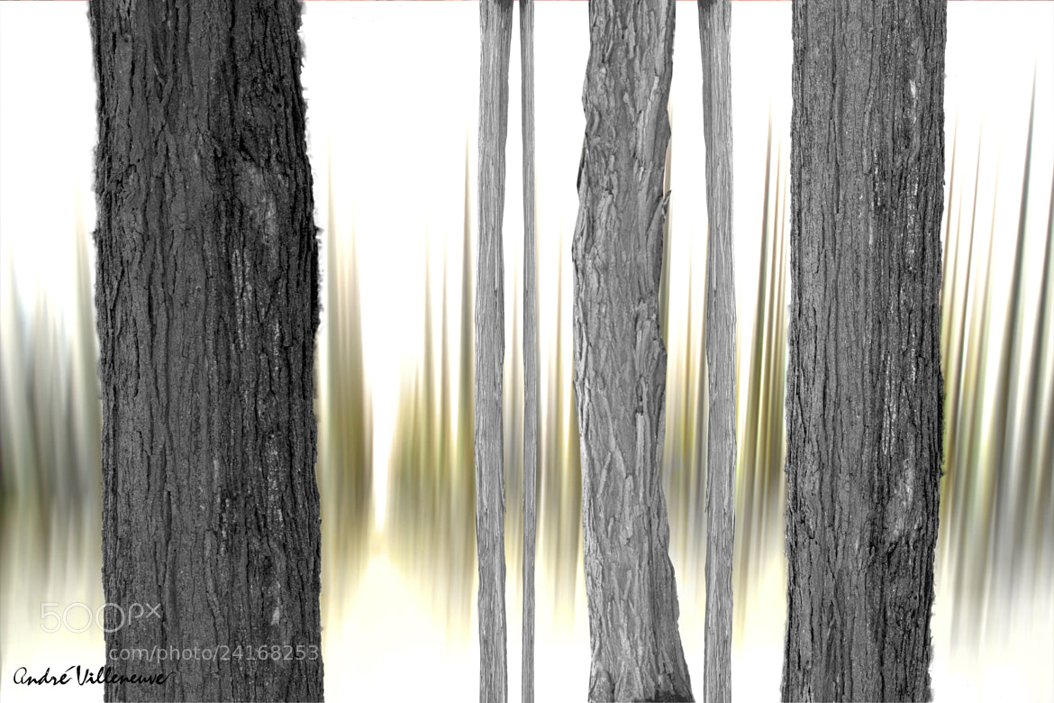 Photograph The trees of wood by Andre Villeneuve on 500px