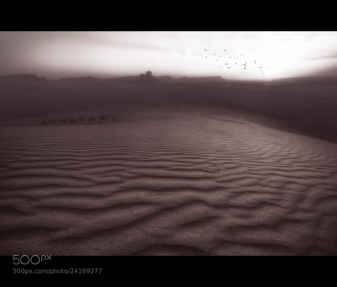 Photograph Shot in the desert 14 by SuLTaN AbdullaH on 500px