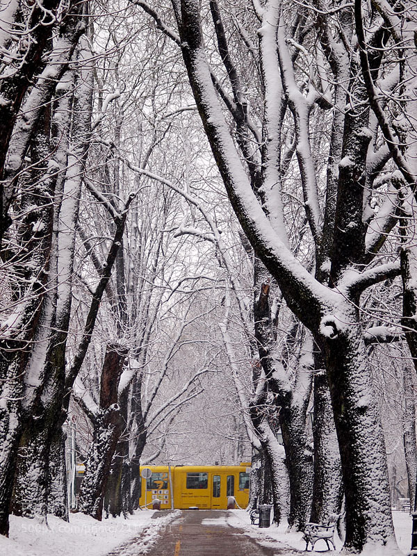 Photograph YELLOW TRAM by Jasmina Gorjanski on 500px