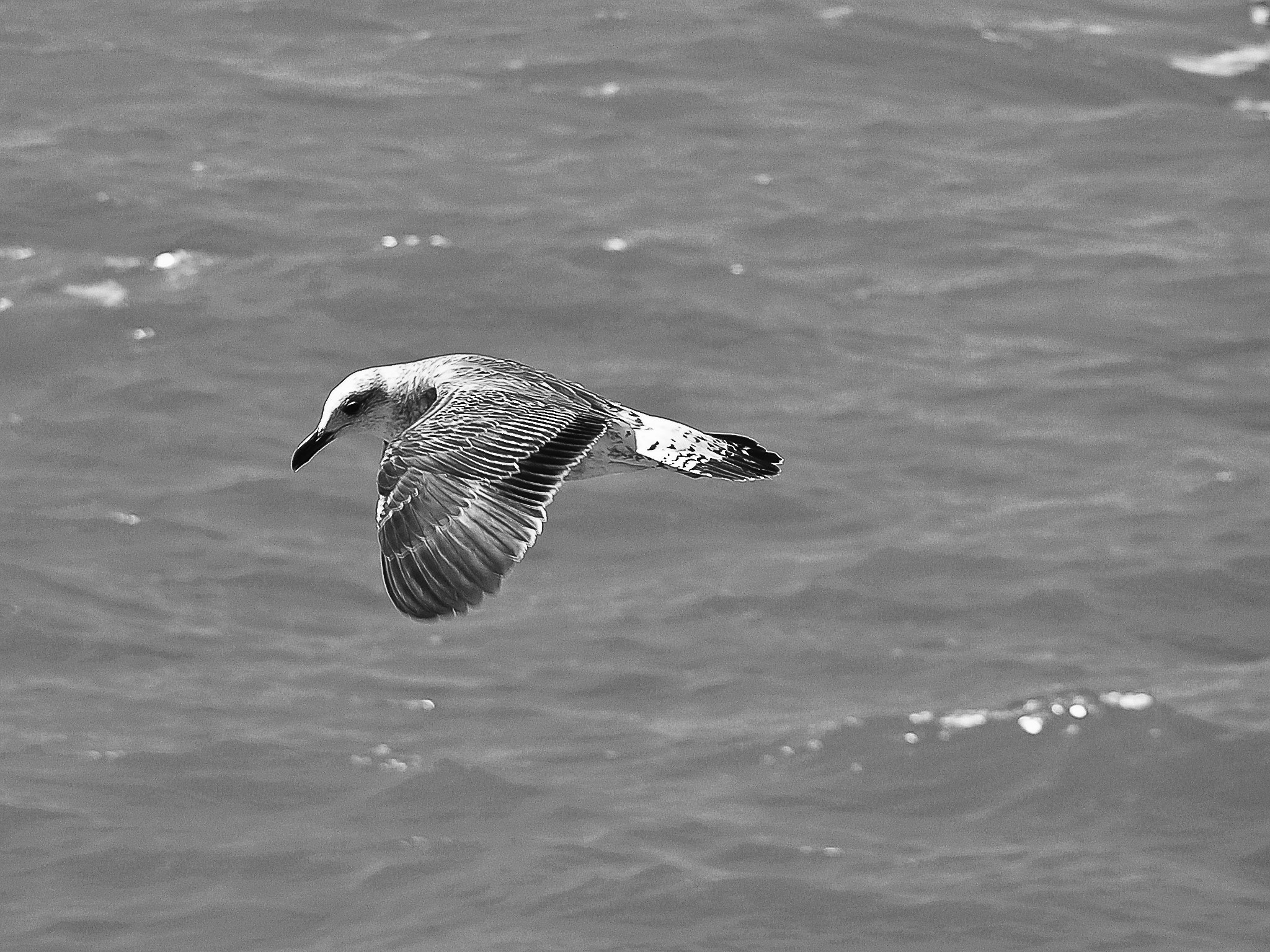 Photograph The flight of the seagull!... by José Covas on 500px