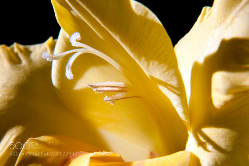 """Camino de Santiago 2012  Ventosa - Azofra VI  _______________________________  Jardín Botánico  """" La magia de los sentidos """"  ____________________________"""