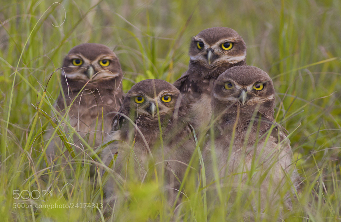 Photograph Brothers..... by Itamar Campos on 500px