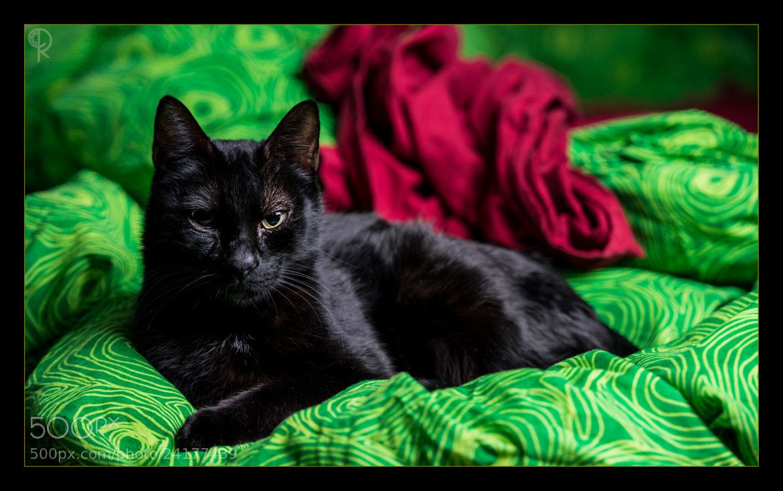 Photograph Cat posing by Roberto D'Antoni on 500px