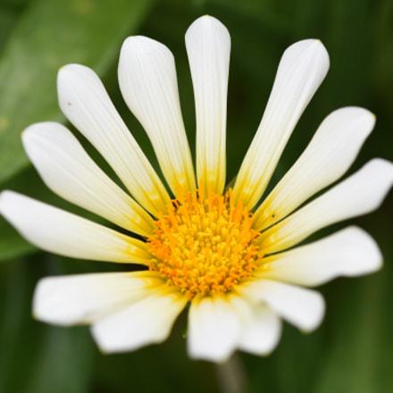 white flower, Nikon D750, AF Micro-Nikkor 200mm f/4D IF-ED