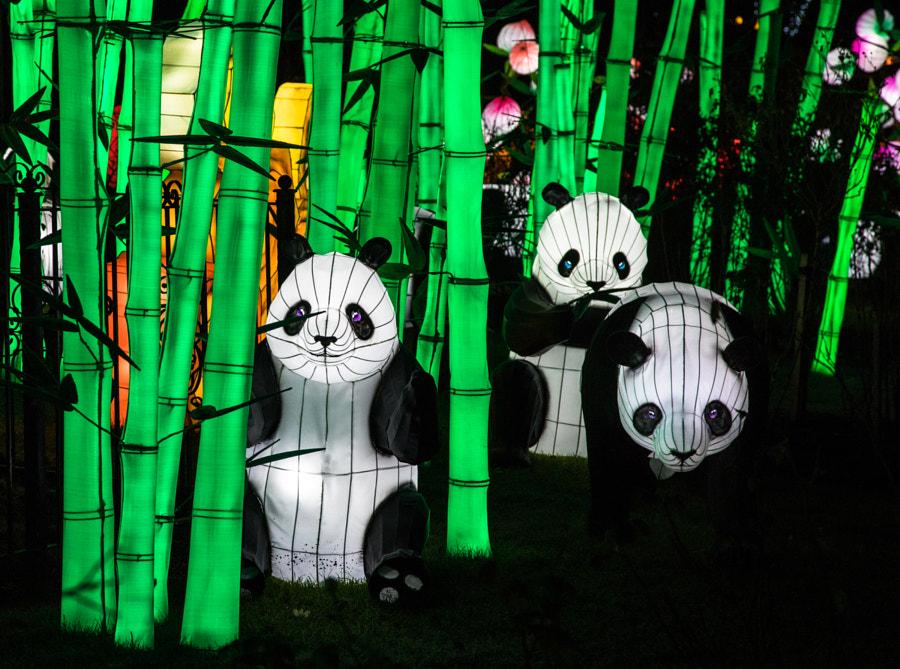 Panda and bamboo lanterns