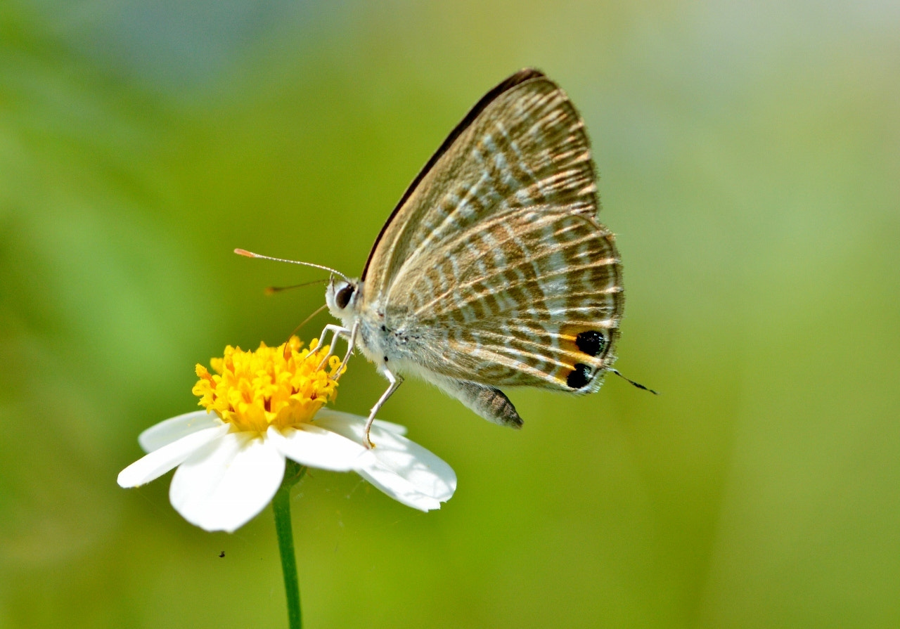 Photograph Butterfly Macro by Terence Kok on 500px