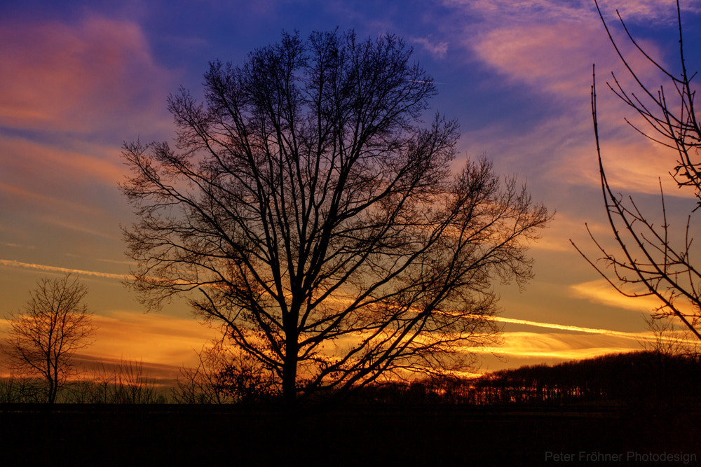 Photograph Der Baum by Peter Froehner on 500px